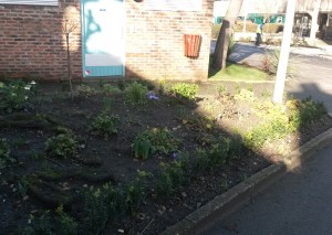 Grounds Maintenance - Aspects Horticultural Services Ltd